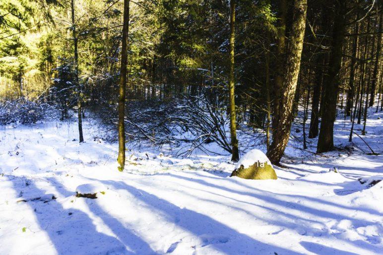 Am ersten Toteiskessel im Wald