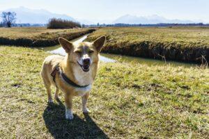 Mikki hat Spaß an der Wanderung