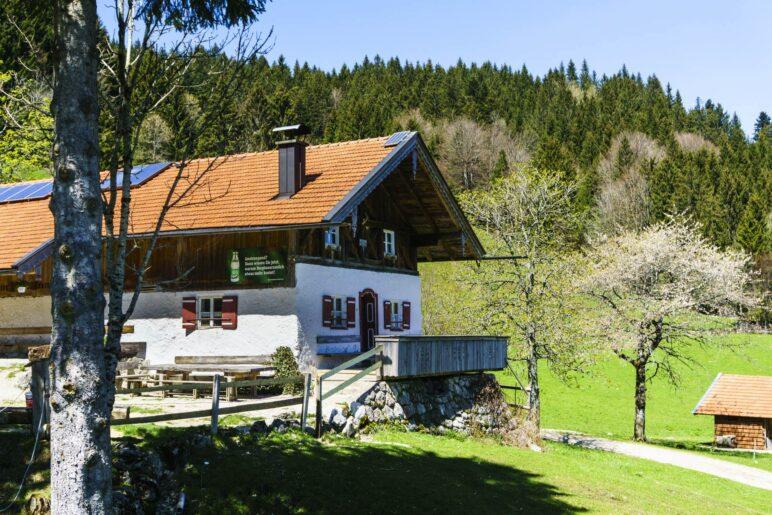 An der Rachlalm oberhalb von Grassau