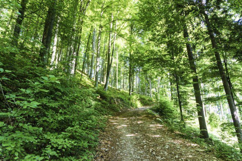 Auf dem Aufstiegsweg zur Hofalm