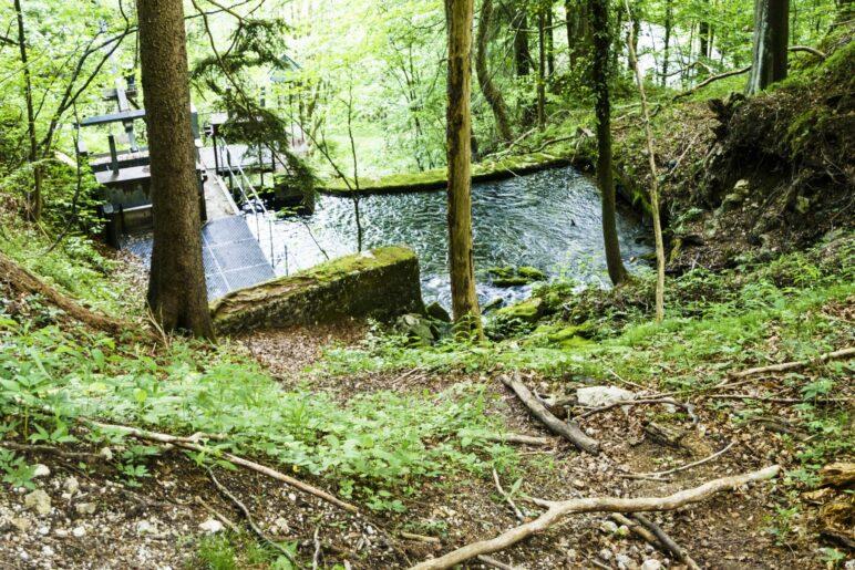 An der Quelle des Hammerbachs