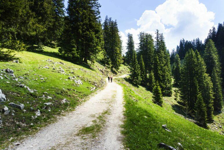 Der Weg hinauf zur Laubenstein-Alm und zum Gipfel