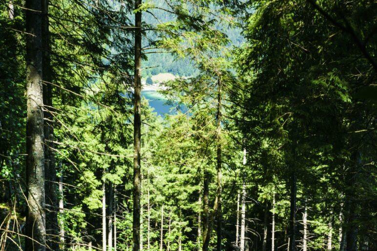 Ein kurzer Blick durhc den Wald auf den Hintersee