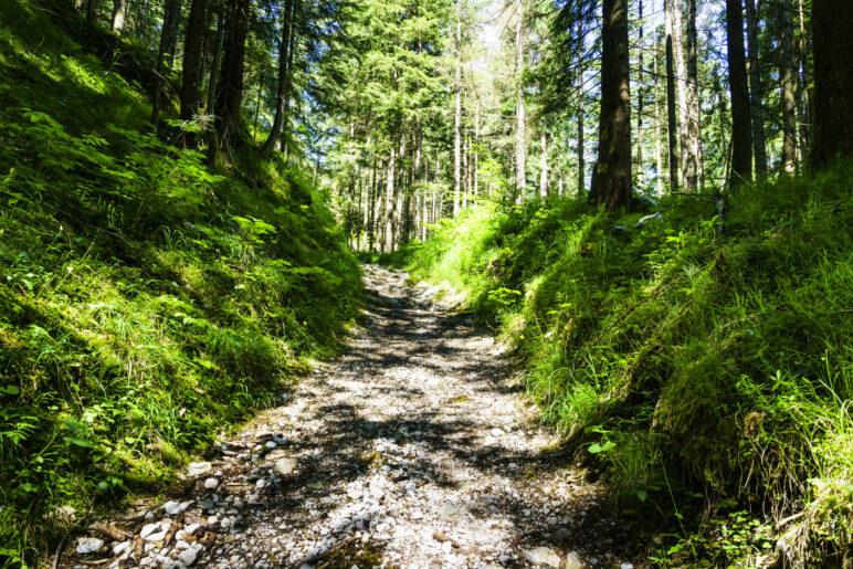 Auf dem Weg 485, der mal ein breiter Weg ist, weiter oben auch ein schöner, schmaler Steig