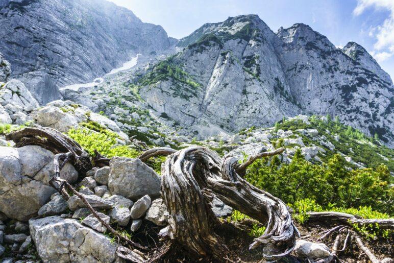 Eine schöne Wurzel auf dem Rückweg vom Gletscher zur Hütte. Im Hintergrund der Aufstiegsweg zum Hochkalter