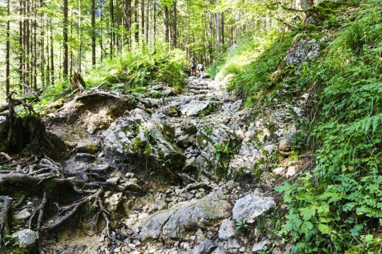 Auf teils recht felsigem Weg geht es durch den Wald zur Branderalm