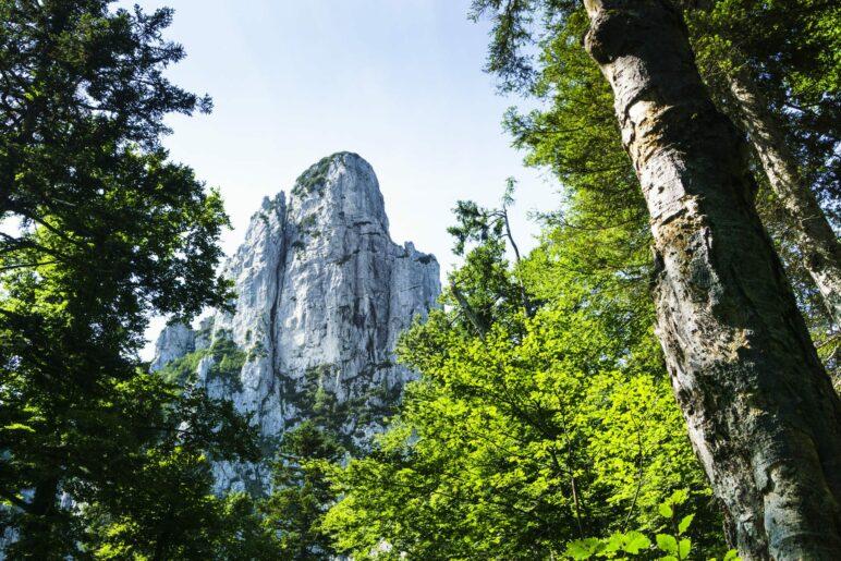 Im Wald kommen wir der Hörndlwand schon recht nah