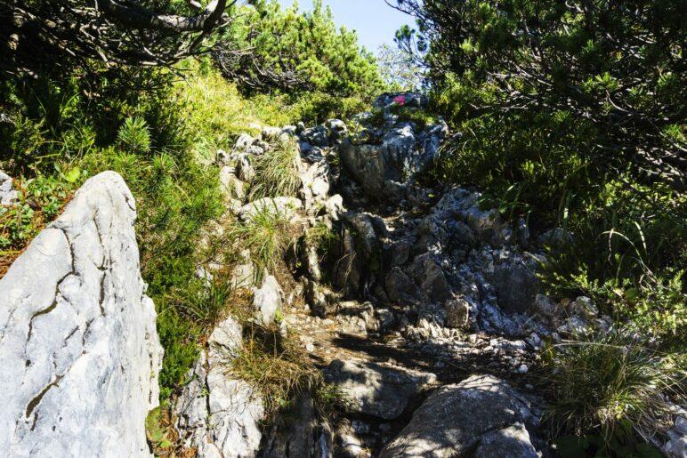 Über einen felsigen Steig zwischen den Latschen hindurch geht es zu den Gipfelkreuzen