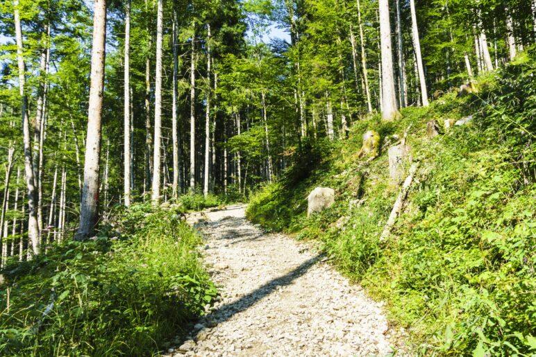 Auf dem Wanderweg geht es durch den Wlld