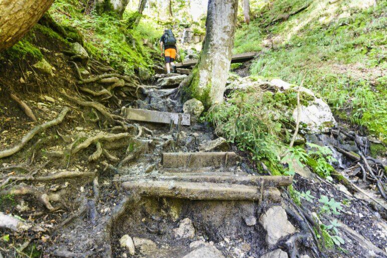 Auf den letzten Metern durch den Wald geht es über einige Wurzeln und Stufen